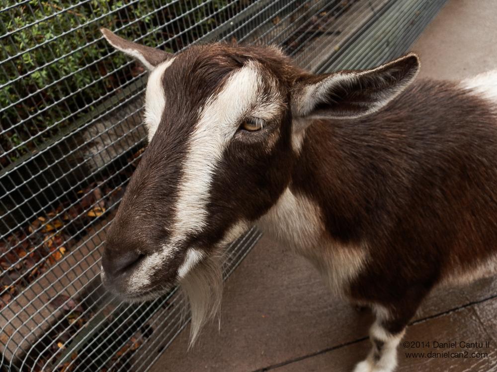 Totes ma goats, man.