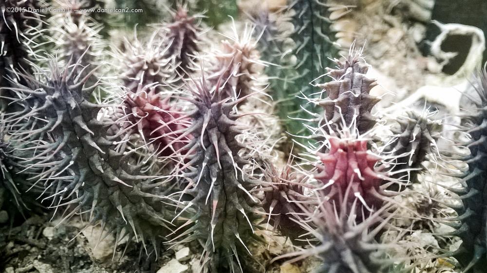 Daniel-Cantu-II-Botanical-Jan-38.jpg