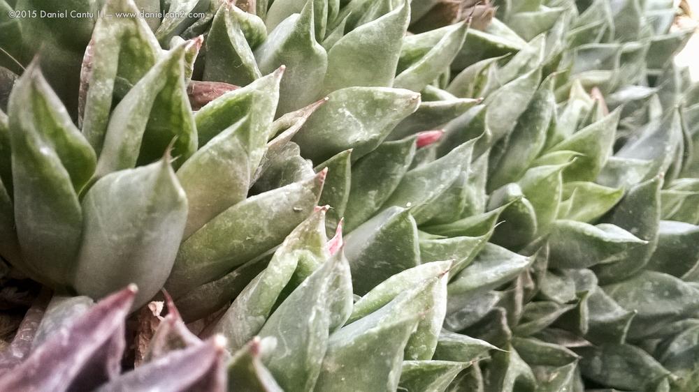 Daniel-Cantu-II-Botanical-Jan-41.jpg
