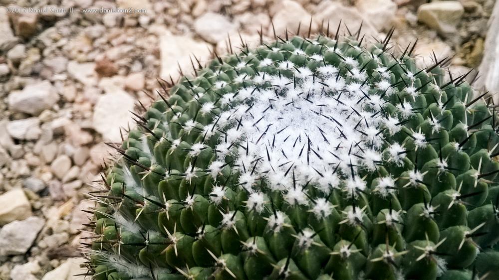 Daniel-Cantu-II-Botanical-Jan-48.jpg