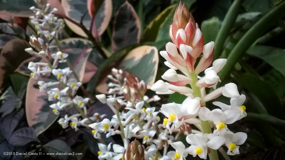 Daniel-Cantu-II-Botanical-Jan-13.jpg