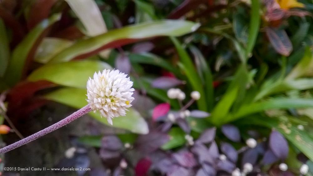Daniel-Cantu-II-Botanical-Jan-18.jpg