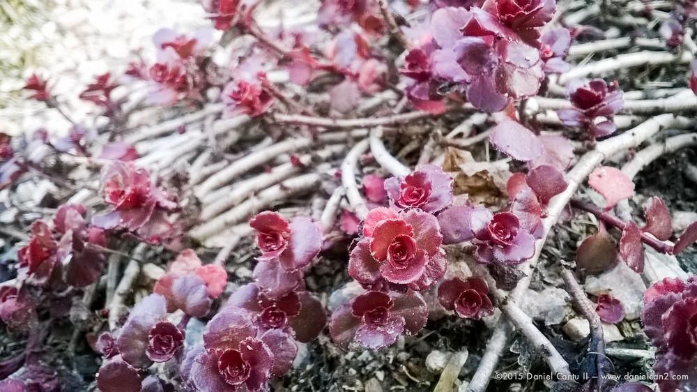 Daniel-Cantu-II-Botanical-Jan-21.jpg