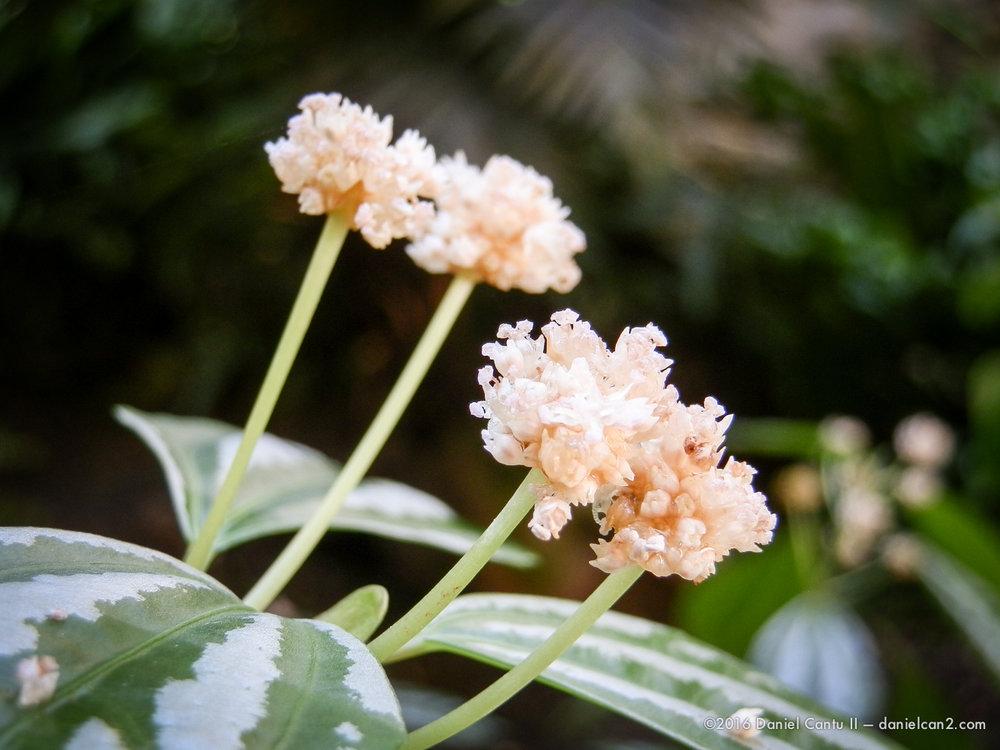 Daniel-Cantu-II-Botanical-Gardens-Oct-2016-64.jpg