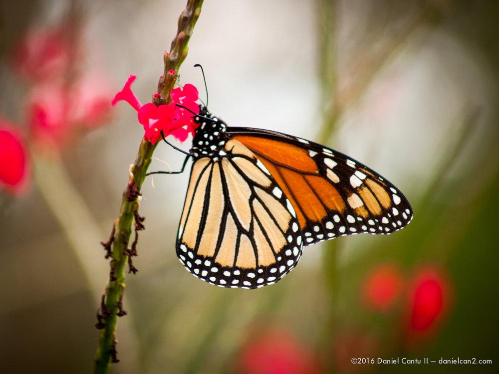 Daniel-Cantu-II-Botanical-Gardens-Oct-2016-47.jpg