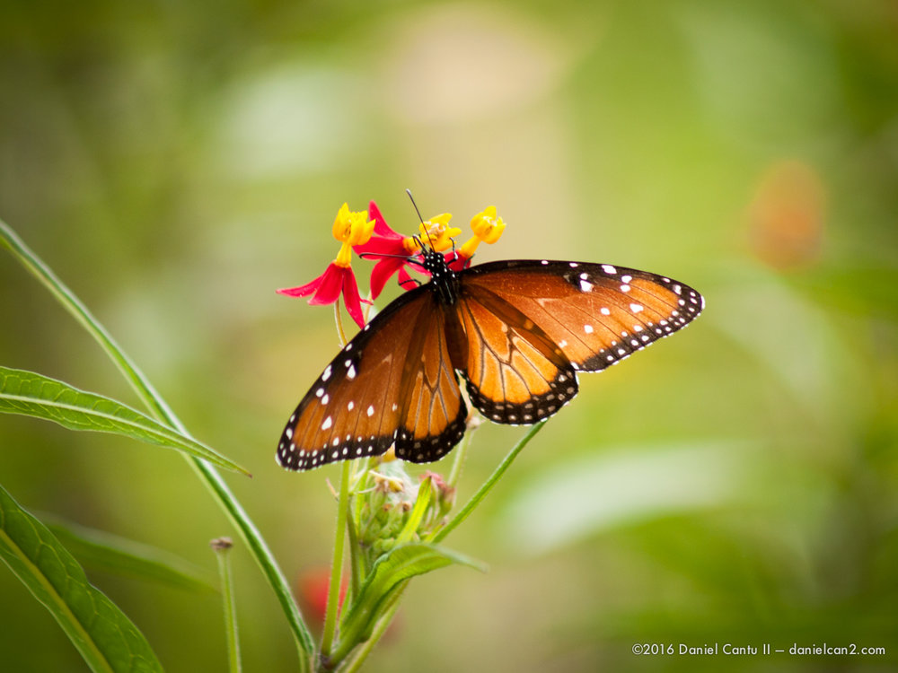 Daniel-Cantu-II-Botanical-Gardens-Oct-2016-49.jpg