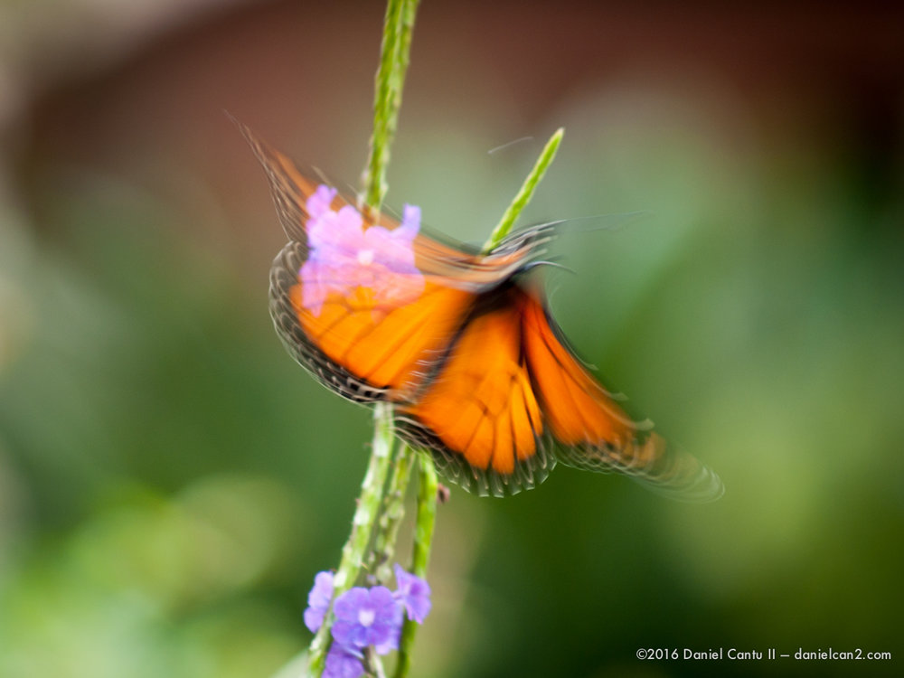 Daniel-Cantu-II-Botanical-Gardens-Oct-2016-46.jpg