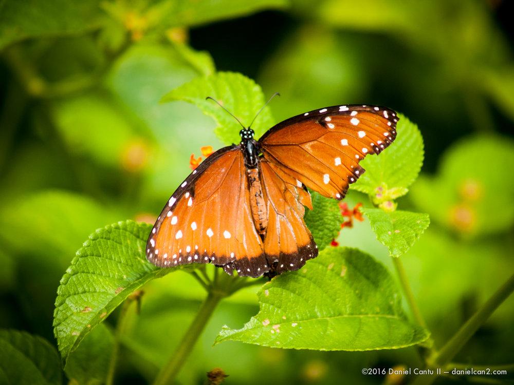 Daniel-Cantu-II-Botanical-Gardens-Oct-2016-50.jpg