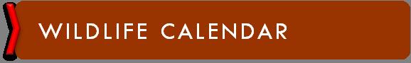 wildlife calendar logo.png