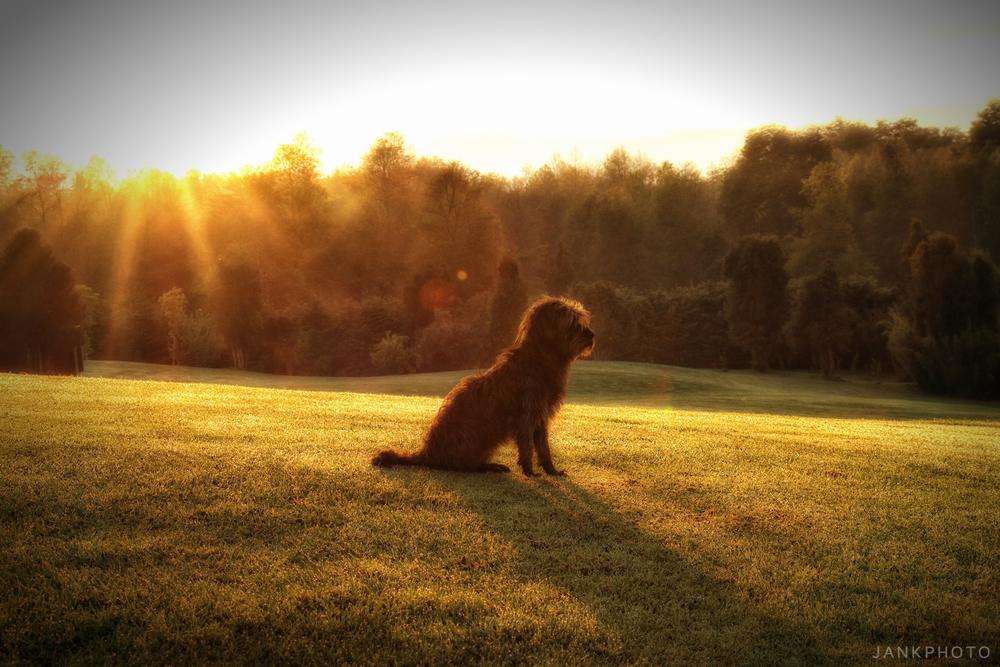 Nik Color Efex 4: Recipe: Morning Mist