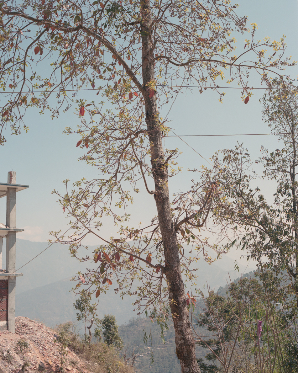 Tree by the earthquake damaged school, Sindhupalchok