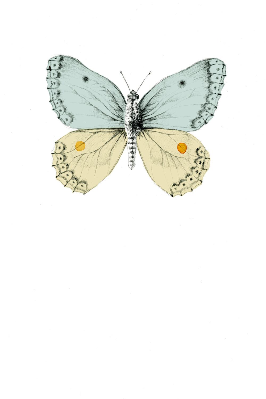 Vlinder kaartje.jpg