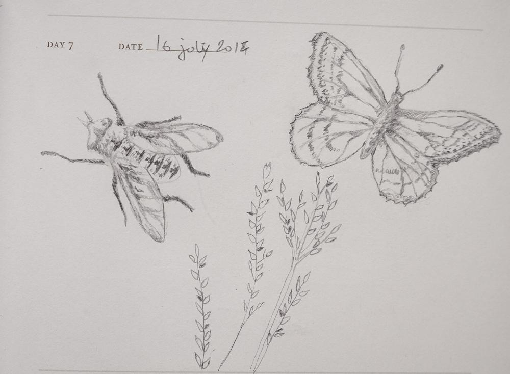 one sketch a day-7.jpg