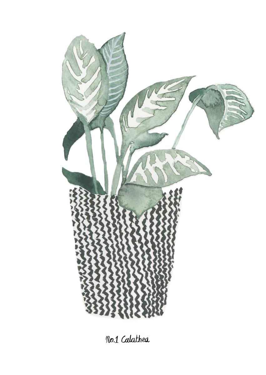 planten-stilleven-plantenillustratie-plantenschilderij-lacabaneenvoyage2.jpg