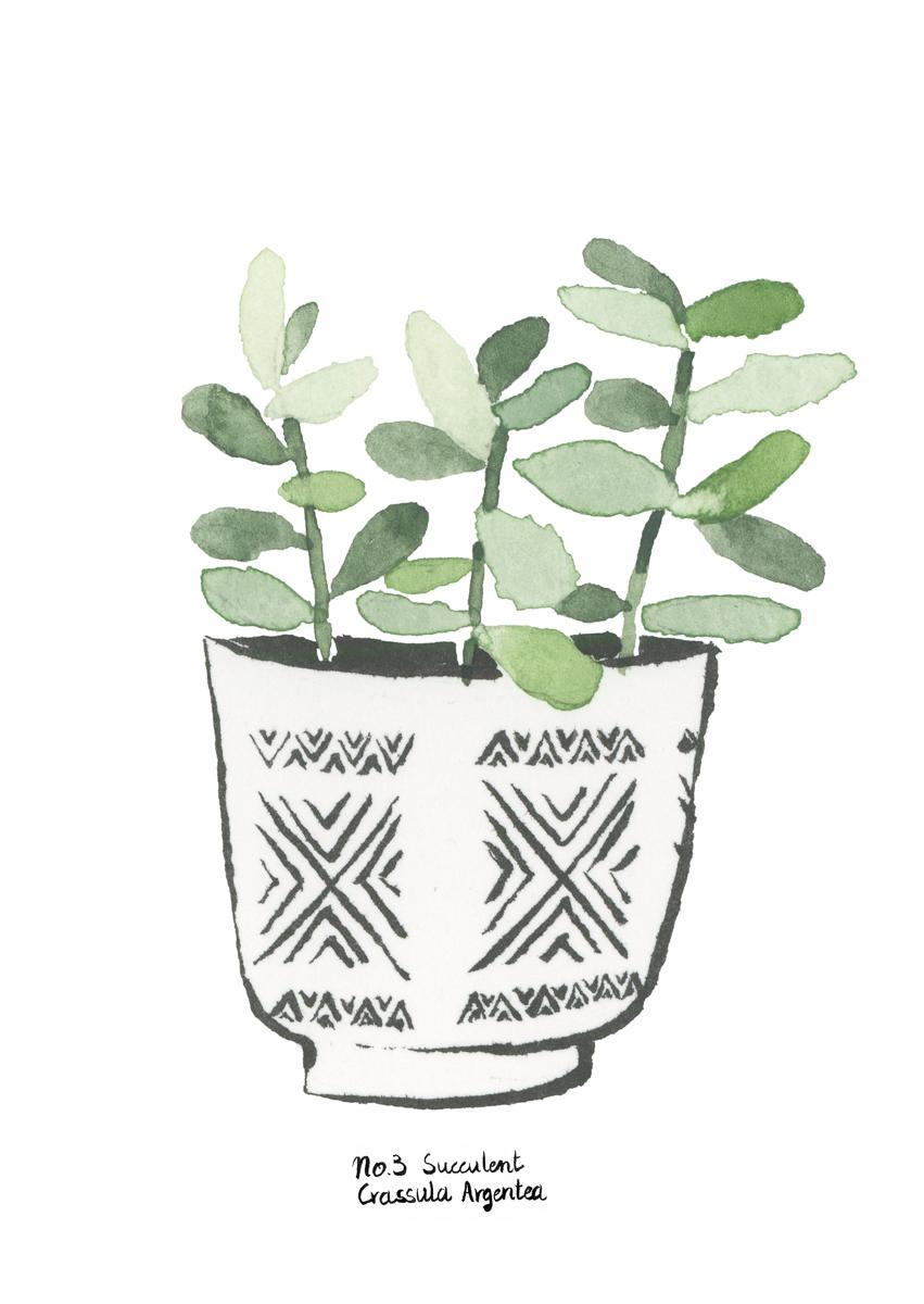 planten-stilleven-plantenillustratie-plantenschilderij-lacabaneenvoyage3.jpg