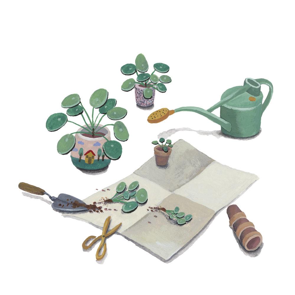 planten-stilleven-plantenillustratie-plantenschilderij-lacabaneenvoyage7.jpg