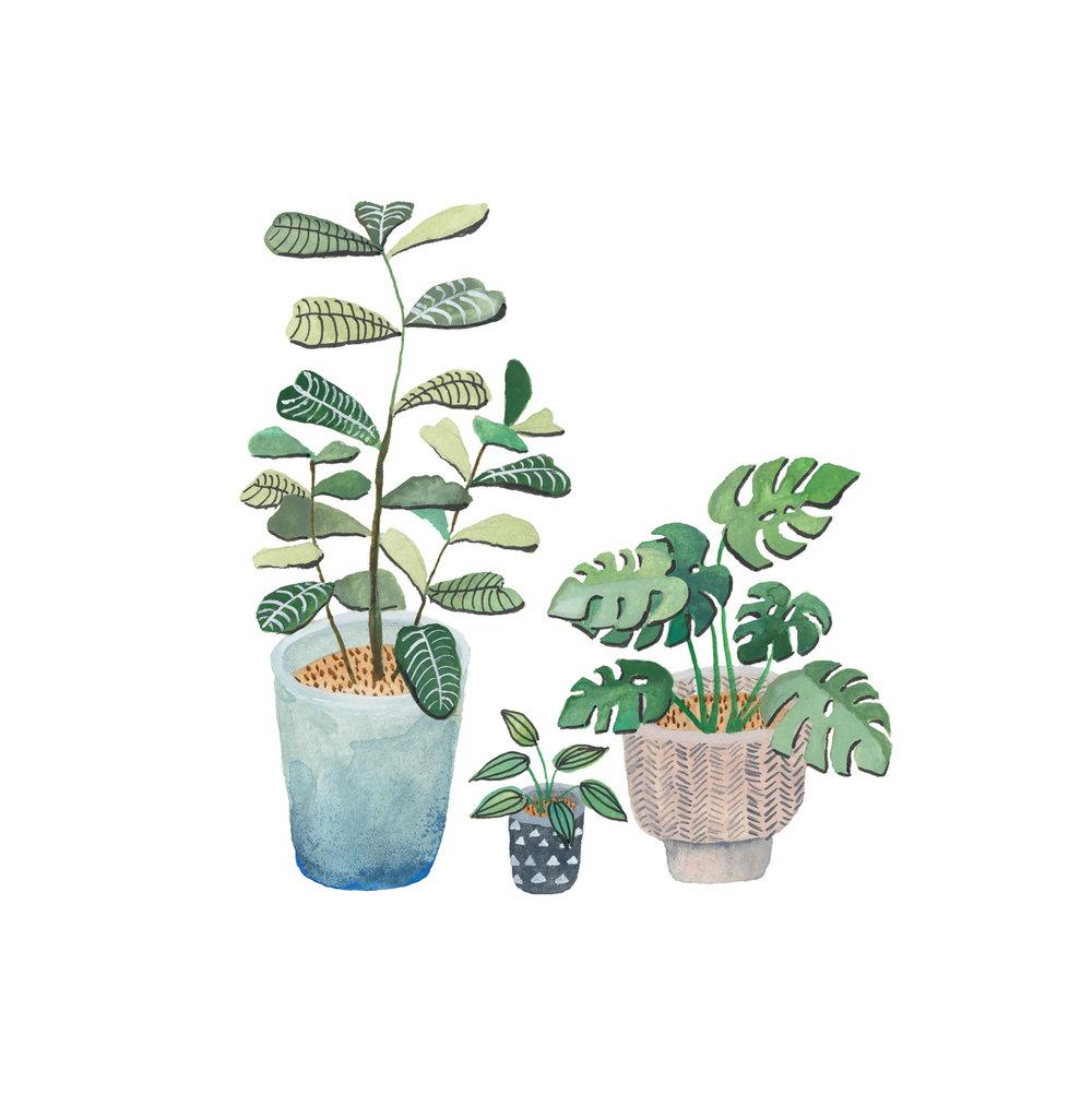 planten-stilleven-plantenillustratie-plantenschilderij-lacabaneenvoyage13.jpg