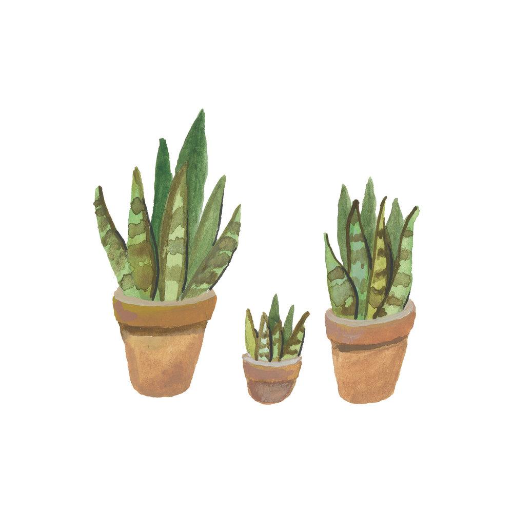 planten-stilleven-plantenillustratie-plantenschilderij-lacabaneenvoyage14.jpg