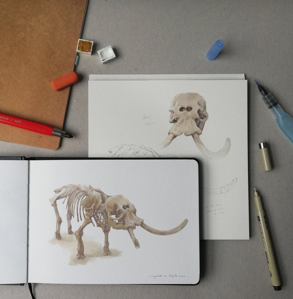 almu-cuesta-elephant.jpg