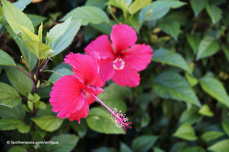 The gardens of Sugar ridge hotel, Antigua