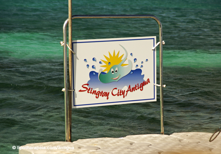 Sting ray city, Antigua