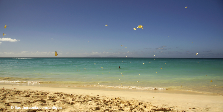 Butterfly storm at Ffryes beach, Antigua