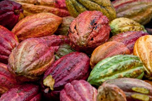 Decolletage - breast lift treatment with cocoa flavanols, by LipoTherapeIa