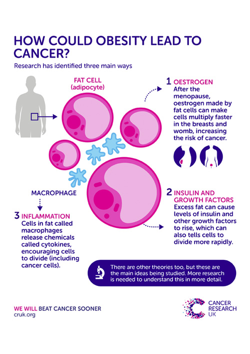 How could obesity lead to cancer
