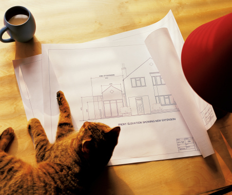 98610554-cat-plans-gettyimages.jpg