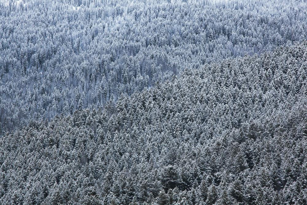 Gros Ventre Wilderness, Wyoming.
