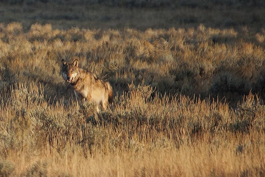 091217_Wyoming-8143.jpg