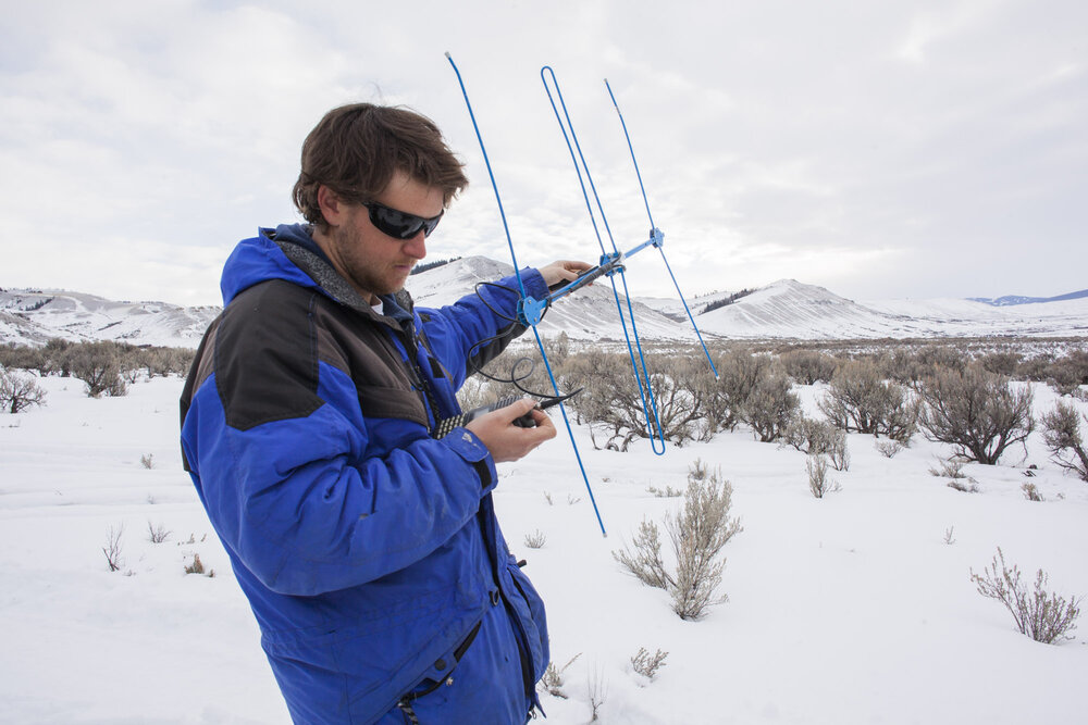 Connor O'Malley, field technician with the Teton Cougar Project checks his telemetry equipment for radio signals from mountain lions the team have collared for their research in the vast Gros Ventre wilderness area of western Wyoming.