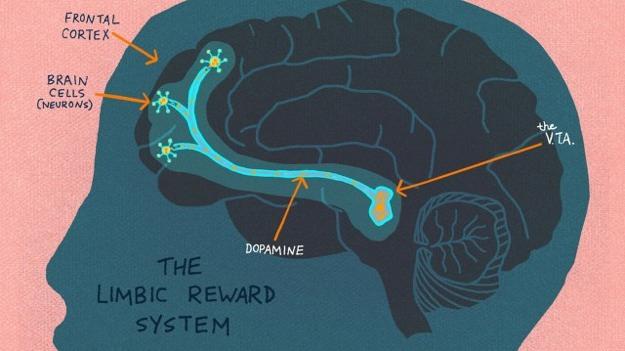 Curious Brain.jpg