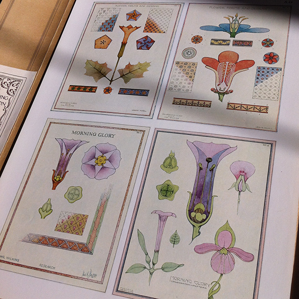 color flower studies.png