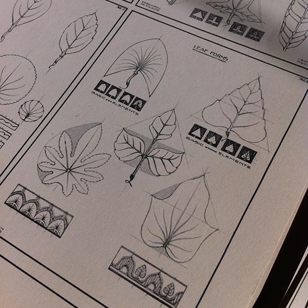 leaf studies 2.png