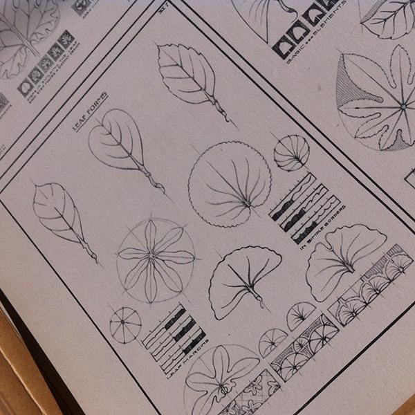 leaf studies.png