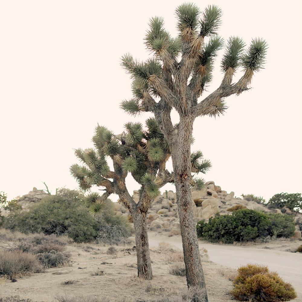 plants7 copy.jpg