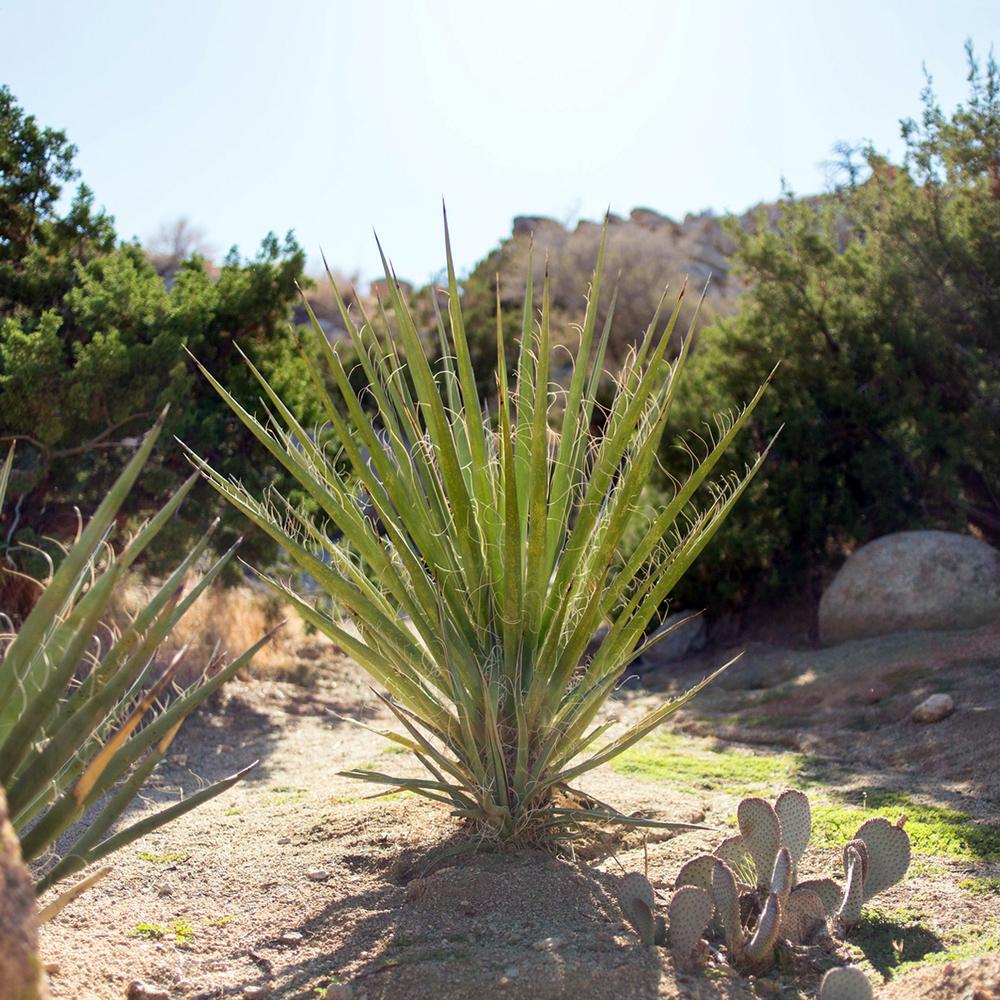 plants5 copy.jpg