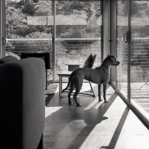sallysdog1.jpg