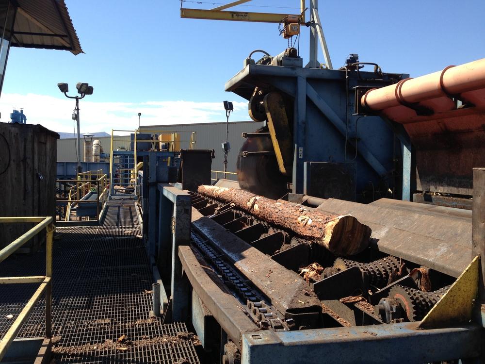 bucksaw and log.JPG