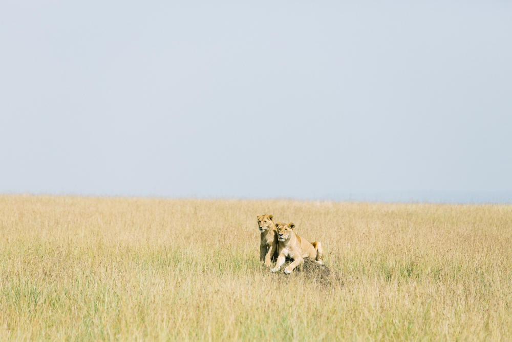 29_Camp_Mara_West_Kenya_Africa_Travel_Photo.JPG