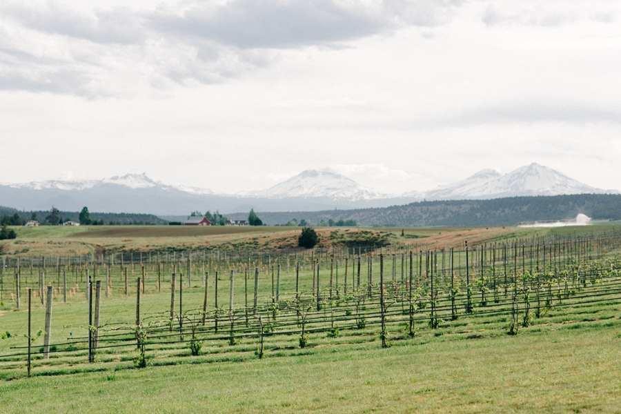 06_HopeFaithandCharityVineyards_Terrebone_Oregon_Wedding_Photo.JPG