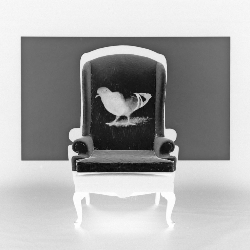 _001 pigeon inverted BW.jpg