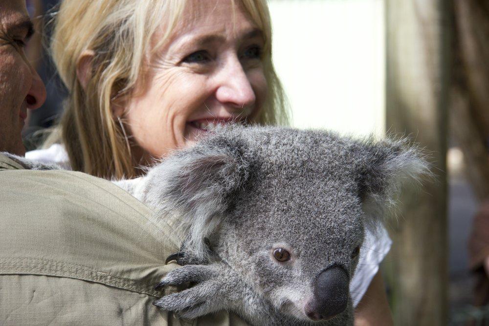 KoalaBear2.jpg