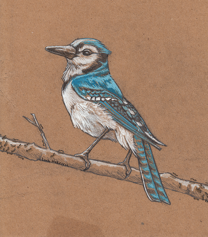 """Blue Jay Way"" (For CB), Gouache, pencil, & watercolor on paper, 5.25"" x 6.75"", October 2015"