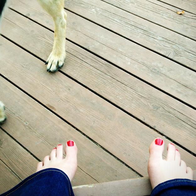Feet with dog