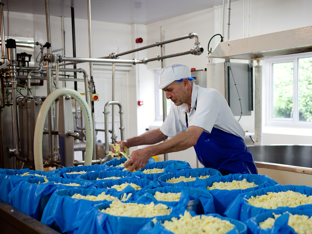 Rob Purchase – Dairy Manager / Cheddar Maker