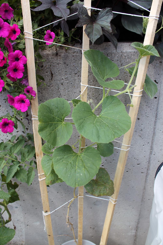 Fluxus Garden 6(2).jpg