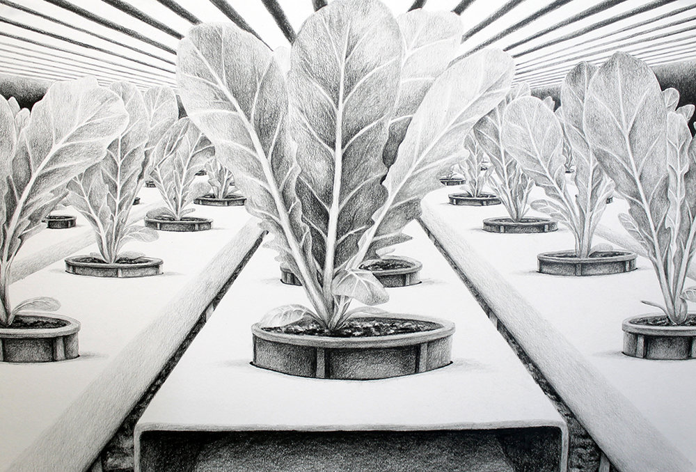 Leamington Greenhouse Drawing test1 2.jpg