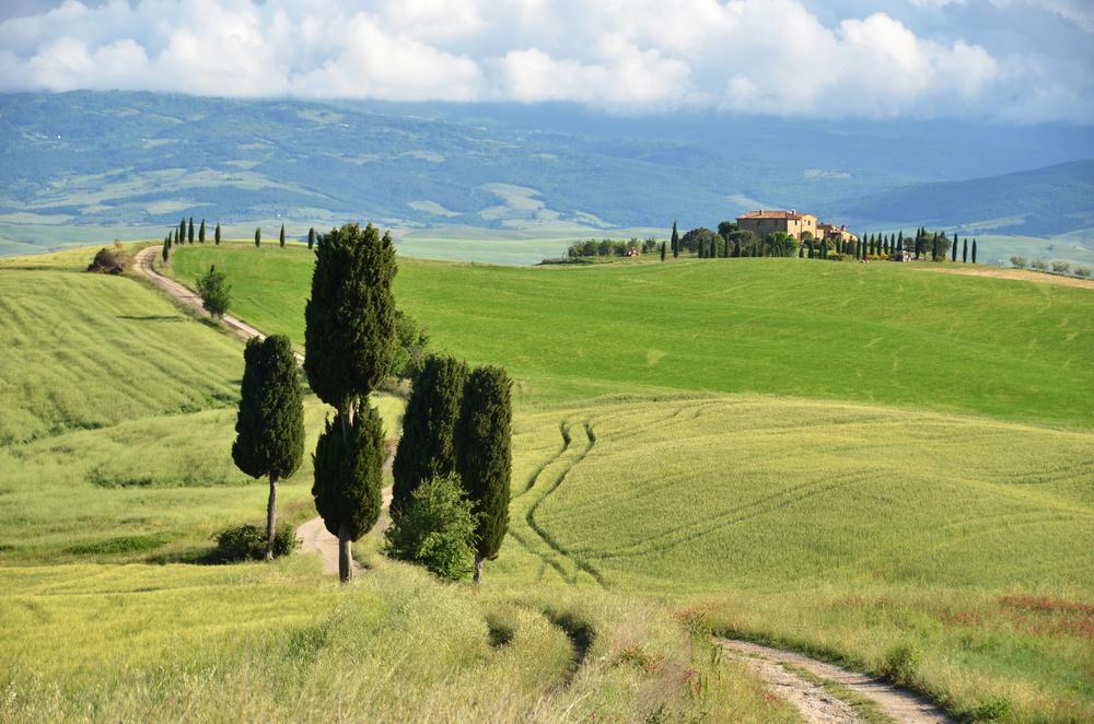 Copy of Cypress trees along rural road. Tuscany, Italy